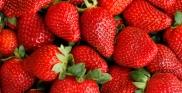 bienfaits-fraises
